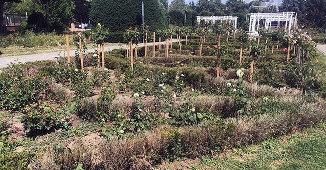 Continuă scandalul de la Horticultura: șefa Consiliului de Administrație, acuzată de ilegalități